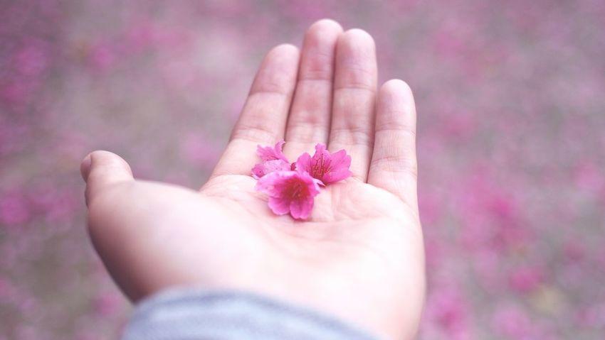 請妳收下… 拿去 Take It Love♥ Pink Sakura Flowers Dark Pink By Motorola Learn & Shoot: Layering