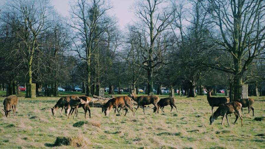 On The Move Deers Bushypark Parkinlondon Spring Grass Animals