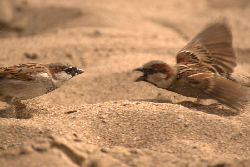 bird fight Fight Animal Fight Animal Bird Birds Bird Desert