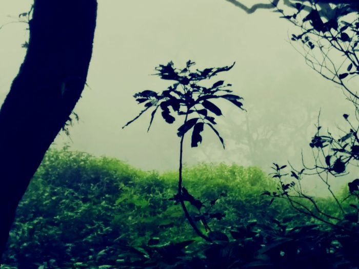 Matheran Hills Hanging Out Taking Photos Check This Out Enjoying Life Foggy Mountains Foggy Morning Trees Love To Take Photos ❤ Relaxing
