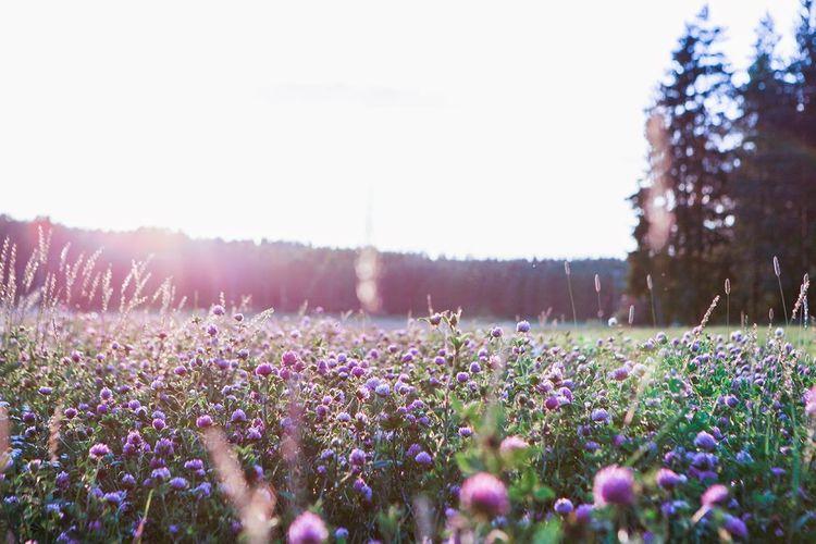 Purple flowers blooming in field