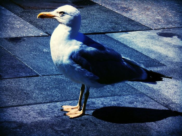 Close-up of seagull perching on footpath
