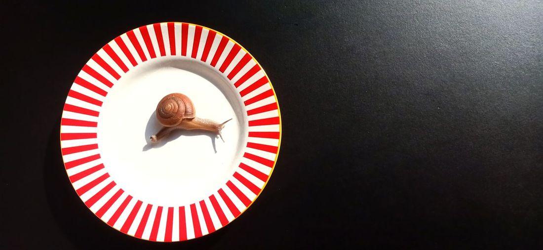 Snail on a