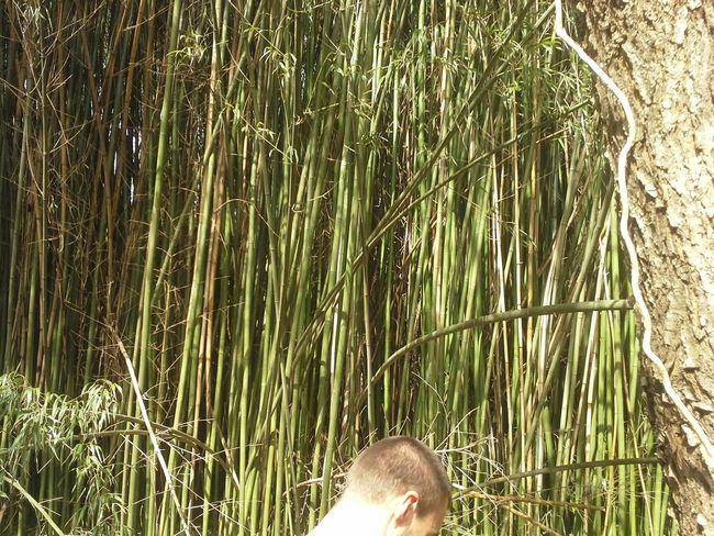 Bamboo Trees Virginia Nature