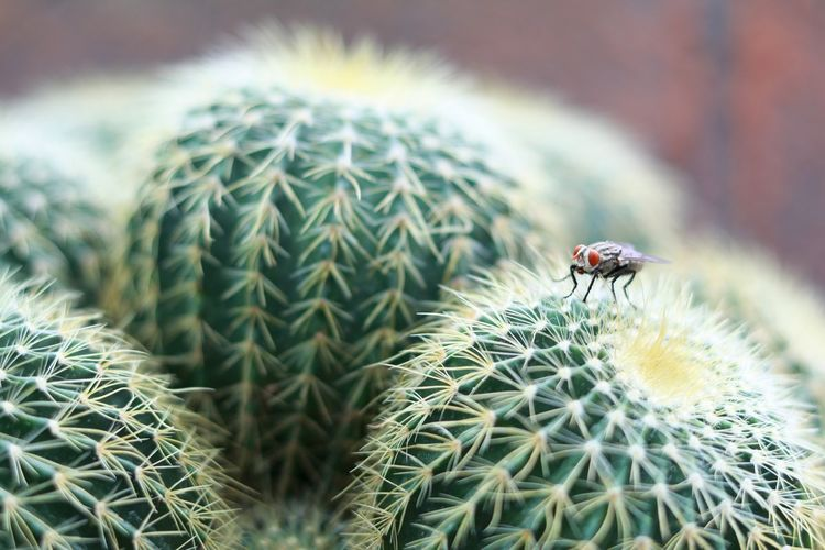 Close-up of housefly perching on cactus