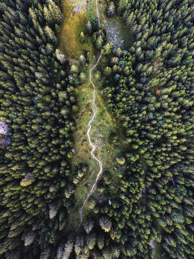 Birds eye view of hiking trail through the woods