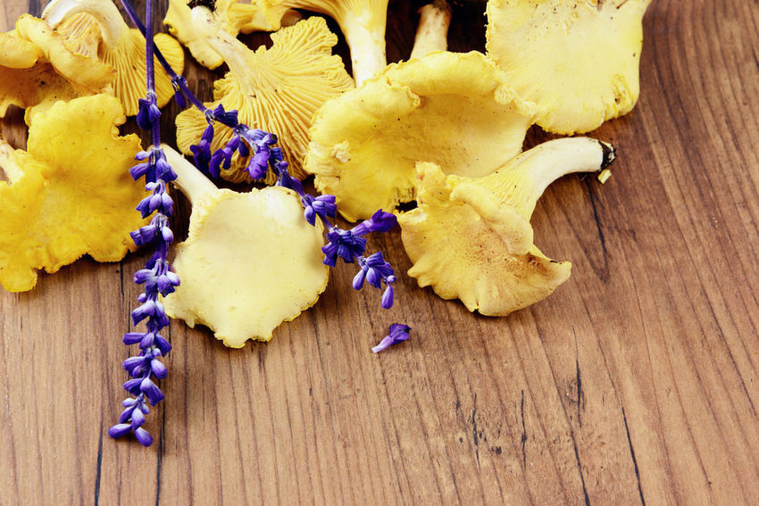 Golden Chanterelle mushrooms on wooden table background. spice like sage aside. Background Chanterelle Mushrooms Chanterelles Food Golden Chanterelle Mushrooms Sage Table Taking Photos Wooden