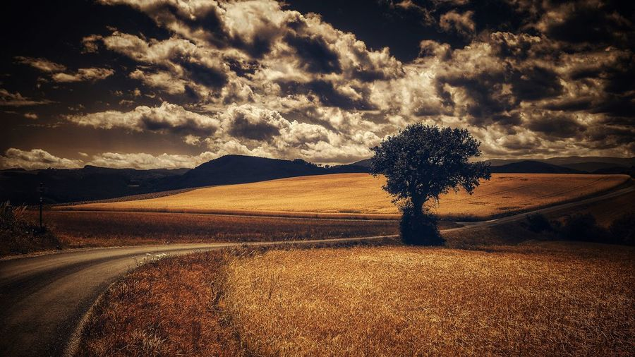 Landscape Scenics Sky Nature Tranquil Scene Cloud - Sky Tranquility Beauty In Nature Road Field Tree No People Outdoors Rural Scene Summertime Capture The Moment Vienna Alps Daily Inspiration Melancholic Landscapes Dramatic Sky EyeEm Selects A Photo Like A Painting EyeEm Selects