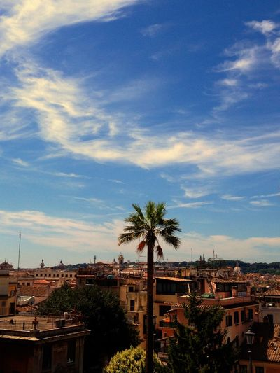 Roma Italy Italia Palm Tree Building Exterior Cloud - Sky Blue Sky Sunny Day I Need Sun I Need Italy ! Adapted To The City The City Light Bella Italia Beauty Of Italy Travel Destinations Summer Exploratorium