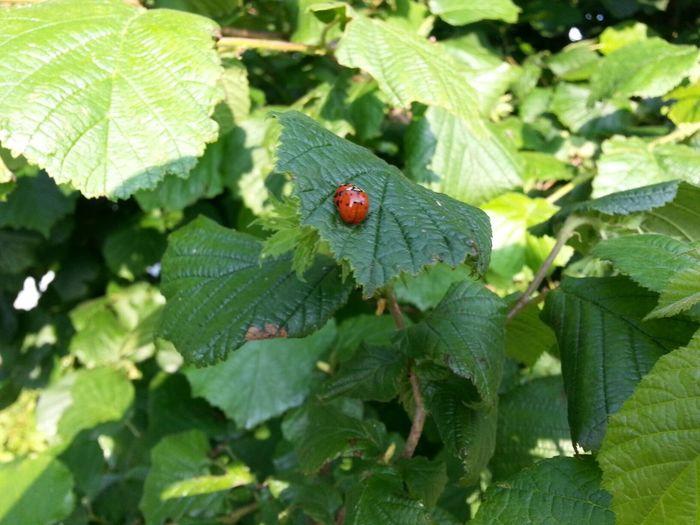 Ladybug Flowers,Plants & Garden Plants
