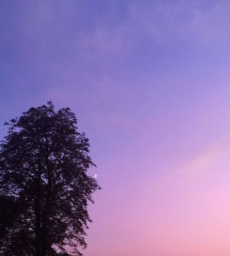 Tree Low Angle View Beauty In Nature Sky Nature Purple Pink Color Unicorn Outdoors Tranquility Clear Sky Scenics Sunset Growth Day