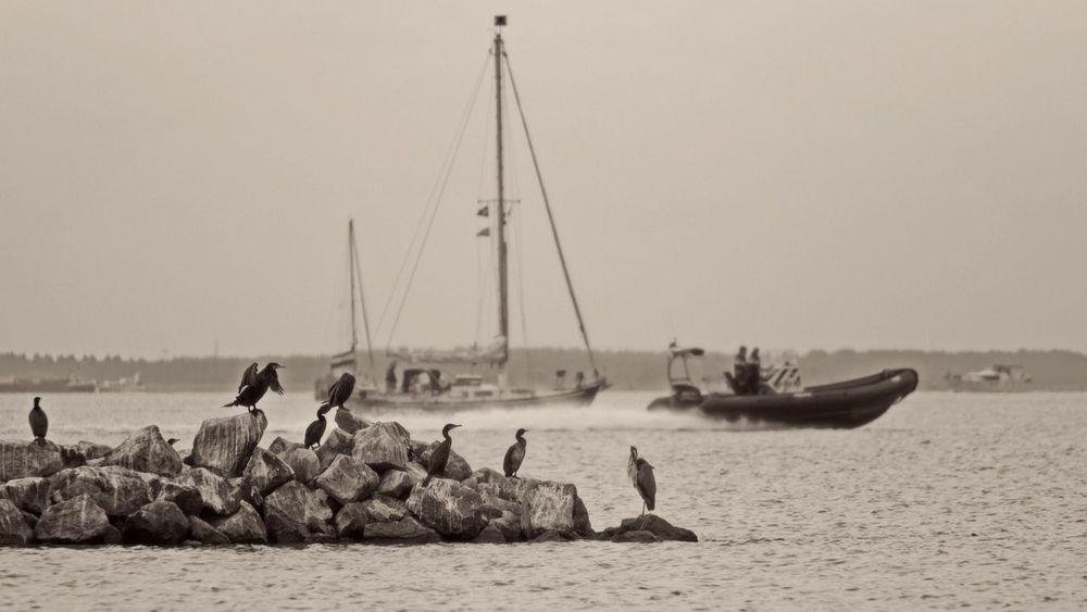 Waterscape Cormorant  Heron Sailing Policeboat Monochrome