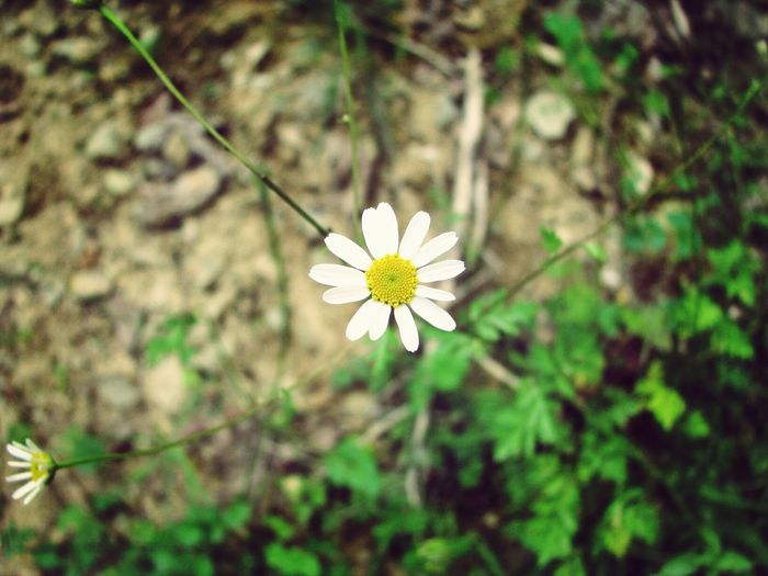 Nature White Flowers Wild Flowers Taking Photos