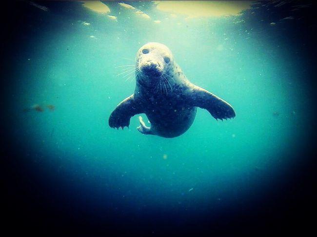 Farne island diving