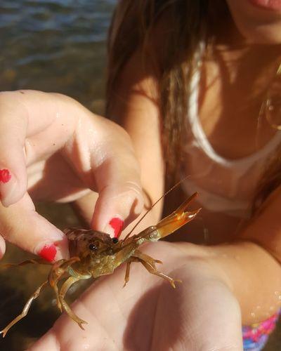 Close-up of girl holding shrimp