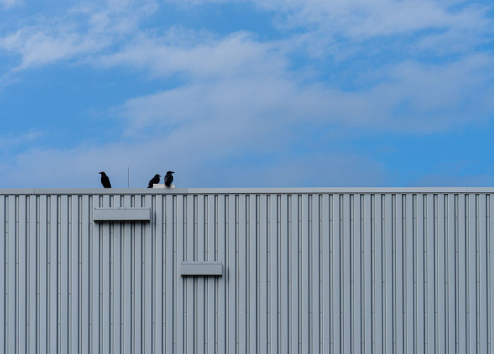 Low angle view of birds perching on building against sky