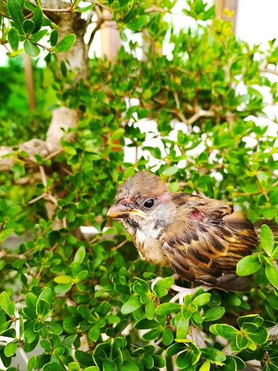 Close-up of sparrow perching on plant