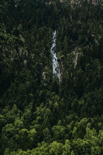 Aerial view of waterfall amidst pine trees in forest