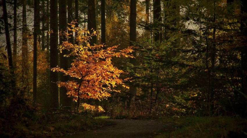 Late Autumn Colors Autumn🍁🍁🍁 Autumn Collection Forest Not Forever Colorful Color Colours Colour Tree Tree_collection  Tree And Sky From My Point Of View Walking Eyem Gallery Color Photography Sony NEX Pastel For You ;-) Beautiful ♥ Lonely Romantic Sunday Morning