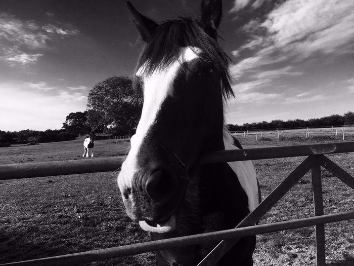Black And White Animals Horses