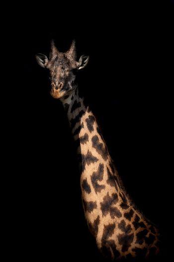 Kenyan Africa