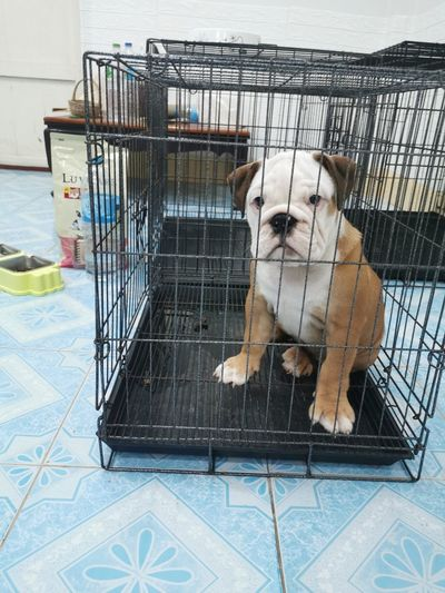 Dog sitting in cage