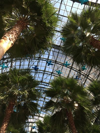 Go Higher Palm Trees Le District NYC Birds Art