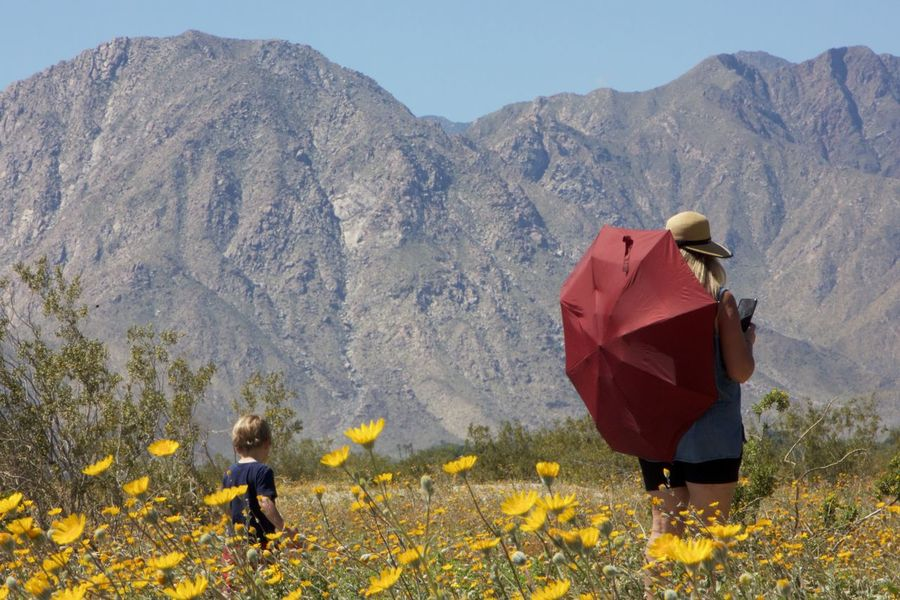 woman in red umbrella with toddler walking through the desert Adult Adventure Beauty In Nature Childhood Clear Sky Day Flower Full Length Landscape Leisure Activity Low Angle View Mountain Nature Outdoors People Real People Togetherness Two People Women Yellow Young Adult Breathing Space Paint The Town Yellow Lost In The Landscape Connected By Travel Be. Ready. California Dreamin This Is Family