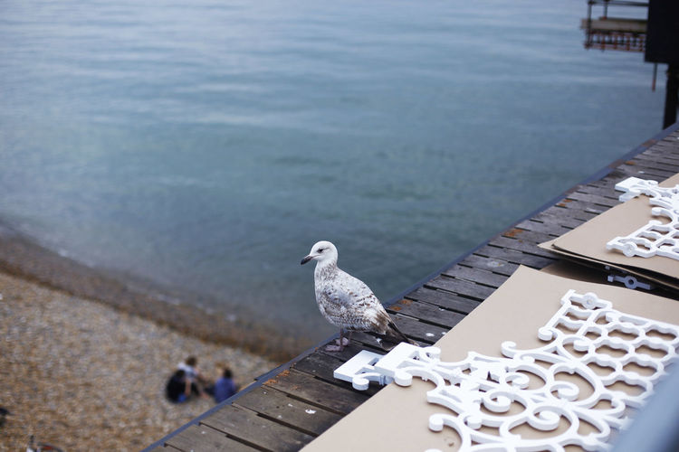 High Angle View Of Seagull Perching On Brighton Pier
