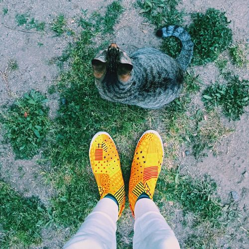 Cat Low Section Human Leg Standing High Angle View Day Eyem Best Shots VSCO Mobilephotography Shoe One Animal