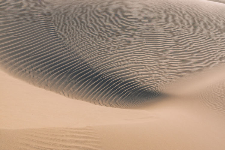 Close-up of sand dunes at beach