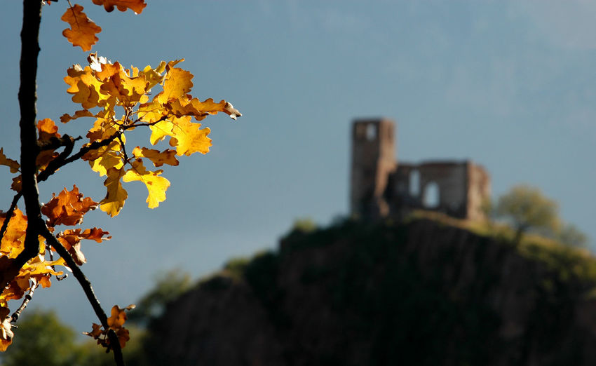 Autumn Close-up Focus On Foreground Hi! Italy Alto Adige Leaves No People Oak Ruins
