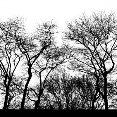 The Trees' Silhouettes Blackandwhite Trees Chicago Latergram