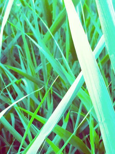 Waterworld Waterplants beautiful in simplicity. PowerInNumbers