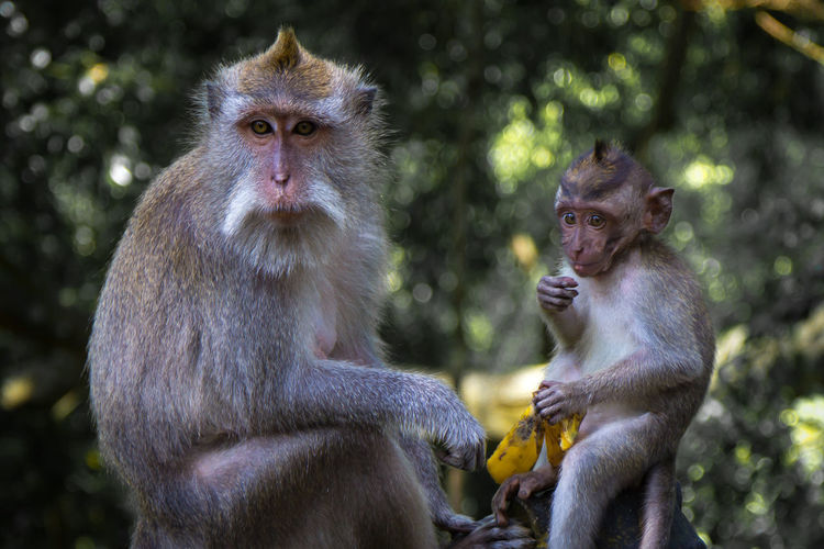Animal Family Animal Themes Animal Wildlife Animals In The Wild Close-up Day Focus On Foreground Infant Mammal Monkey Nature Outdoors Sitting Togetherness Two Animals Young Animal