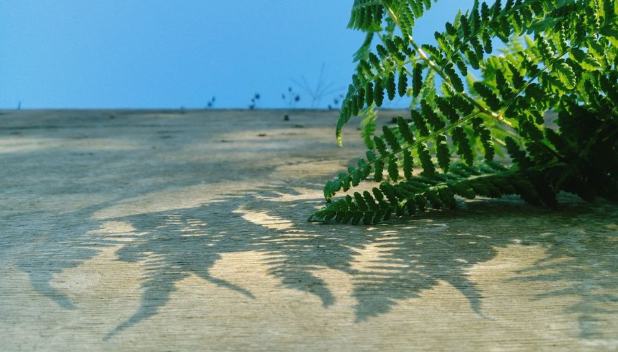 Great Weather Outdoors Great Atmosphere Nice Atmosphere Nice Day Ferns Light And Shadow EyeEm Nature Lover Nature Shadow On The Wall Green Leaves Green Nature Green Plant Lovely Weather
