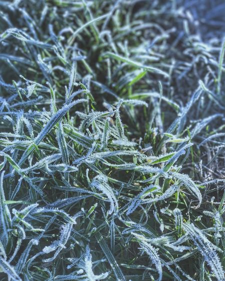 Nature Plant Cold Temperature Winter Close-up Outdoors Grass Green Color No People Day Cold Frost