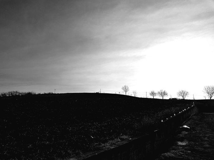 Arid Climate Arid Landscape Taiga Cold Sunny Day Desolated Landscape Rural Scene Tree Sky Sky Only