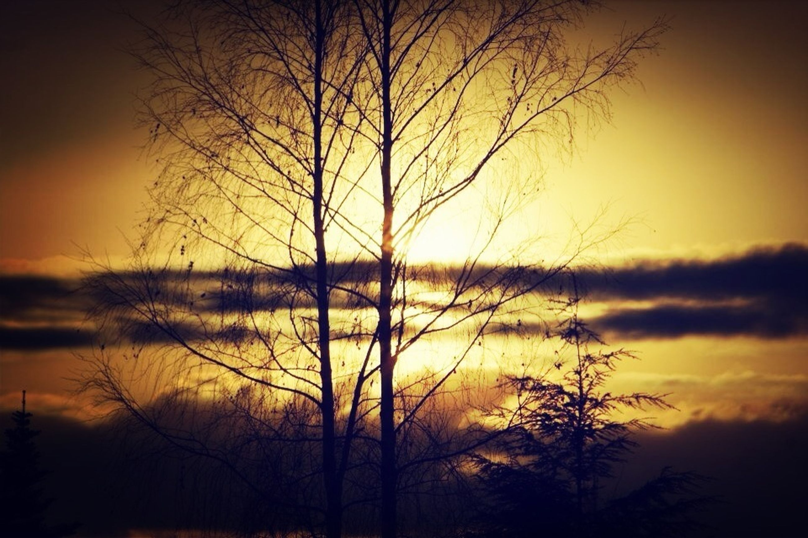 sunset, silhouette, bare tree, orange color, tranquility, scenics, tranquil scene, beauty in nature, tree, sky, sun, branch, nature, idyllic, cloud - sky, dramatic sky, majestic, outdoors, no people, moody sky