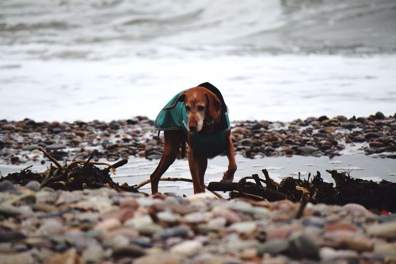 Portrait of dog on beach against sky