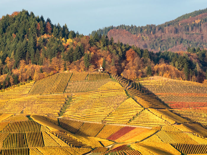 Scenic view of agricultural field against sky during autumn