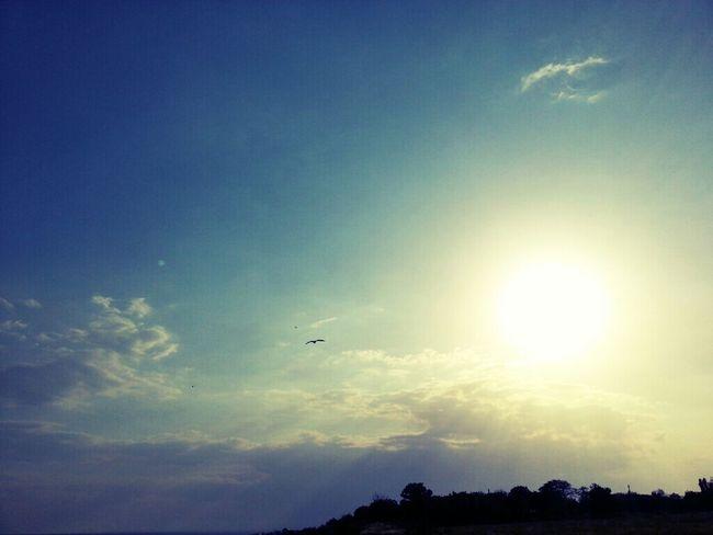 sky Sky Ukraine Sun Bird