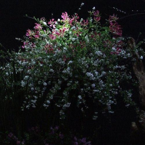 Floralarrangiment Flor Flower