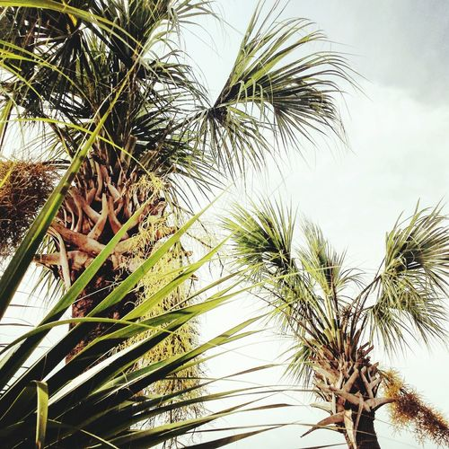 Took my first palm tree photo and wanted it to be perfect First Eyeem Photo