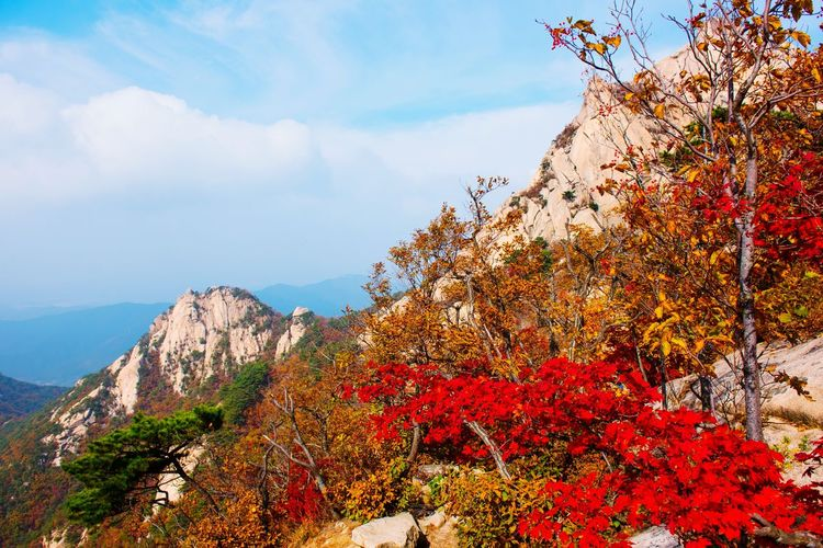 Red flowers on tree by mountain against sky