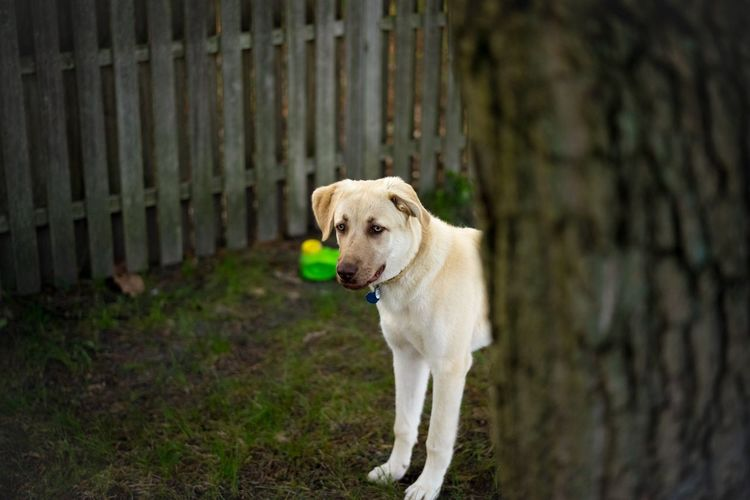 Dog Animal Themes Domestic Animals One Animal Pets Mammal Day Outdoors No People Nature Pet Portraits