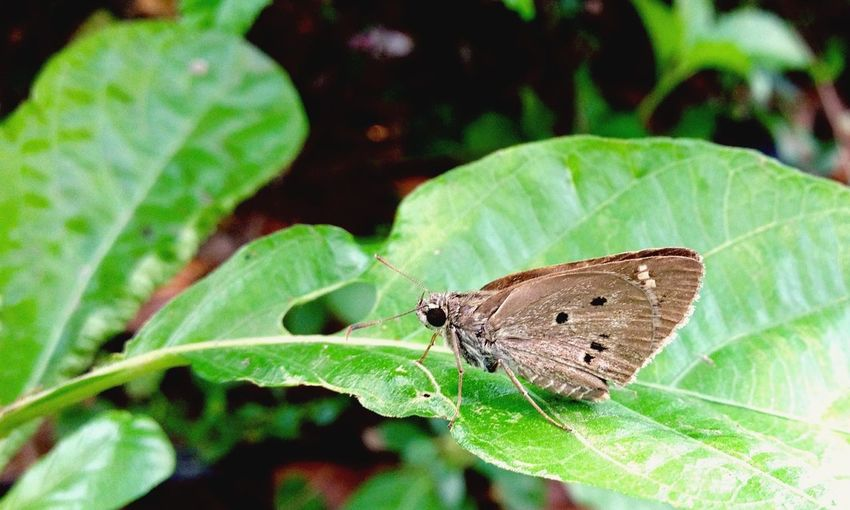 Standby Butterfly on the Leaf Animal Insect Nature Lover