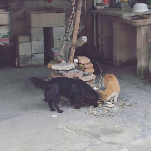Pets Animal Themes Domestic Animals 原来美丽的远方 不及陪在你身旁