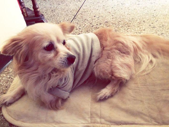 Descansando Dog Dog Love
