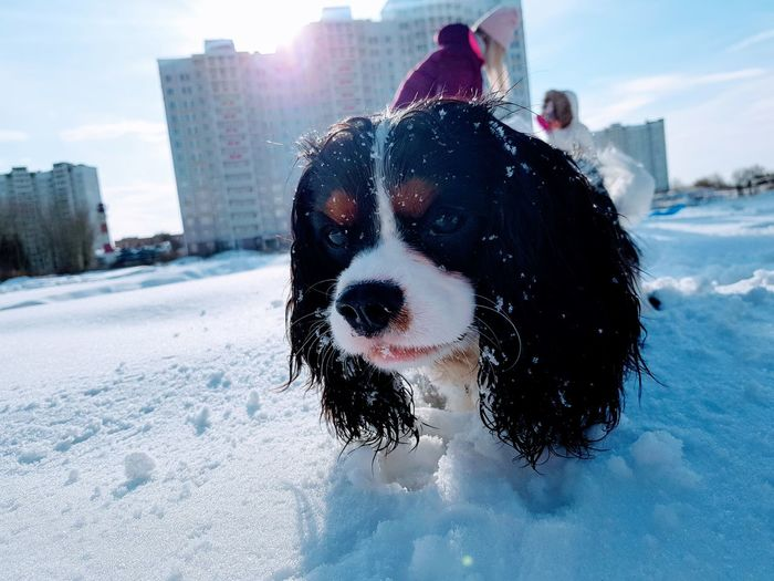 GalaxyNote8 King Charles Spaniel Stories From The City Snow City Water Pets Dog Cold Temperature Wet Sky Building Exterior